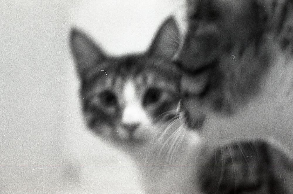 007 [T][F] Pentax K1000 - Kodak X-Pan 125 - 002.jpg