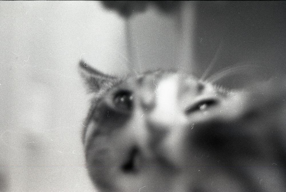 007 [T][F] Pentax K1000 - Kodak X-Pan 125 - 005.jpg
