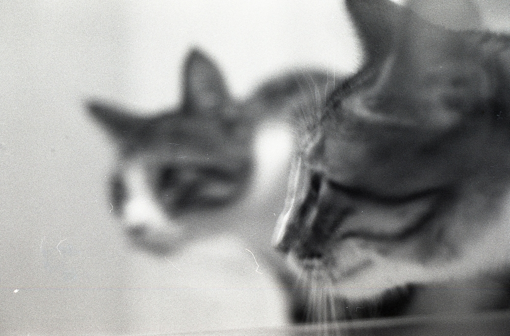 007 [T][F] Pentax K1000 - Kodak X-Pan 125 - 003.jpg