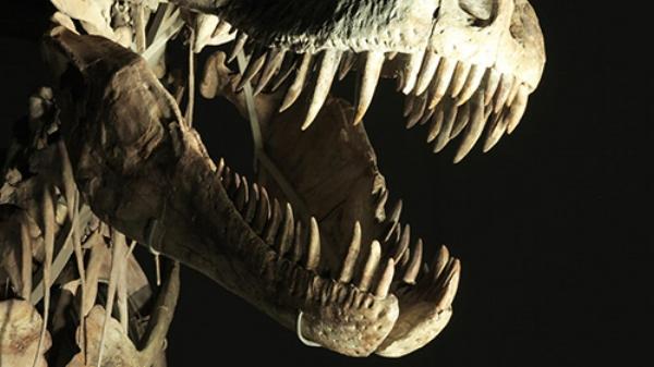 Dinosaurs-The-Hunt-for-Life.jpg