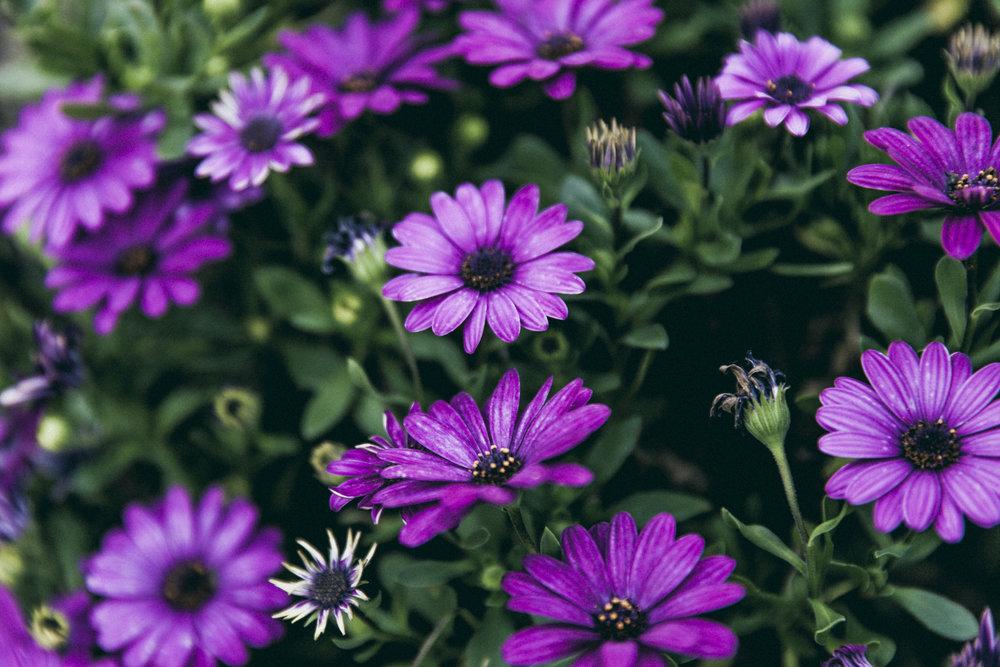 Harmonie Garden Flowers