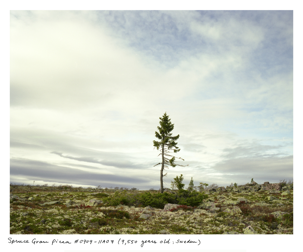 spruce_0910_11a07.jpg