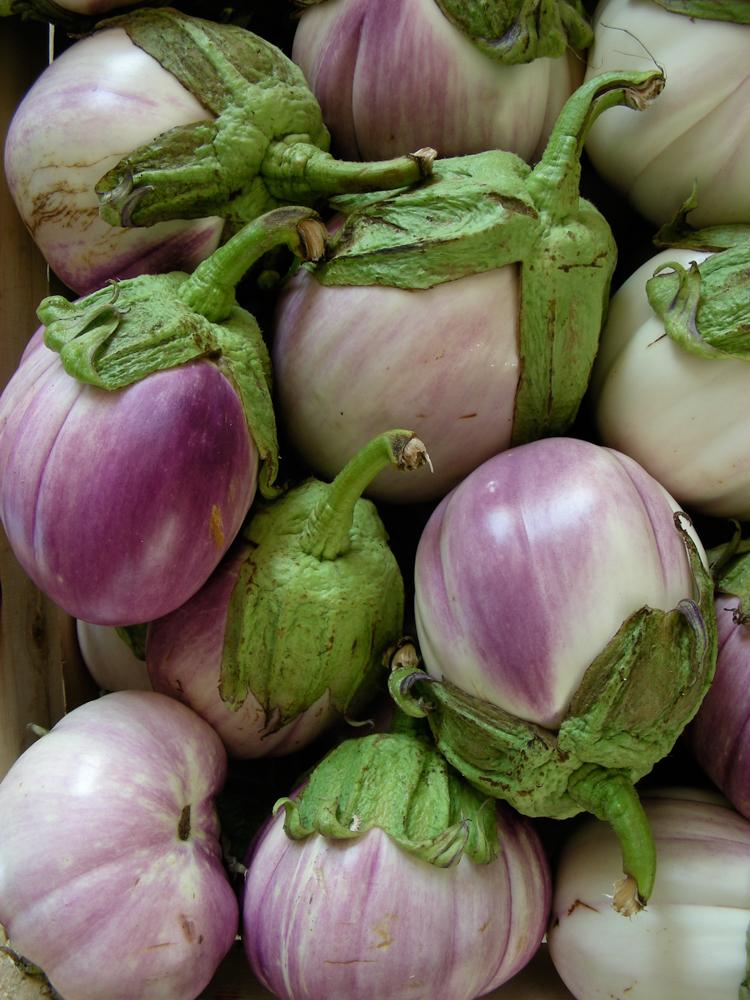 bildarchiv-gemuese-aubergine-01.jpg