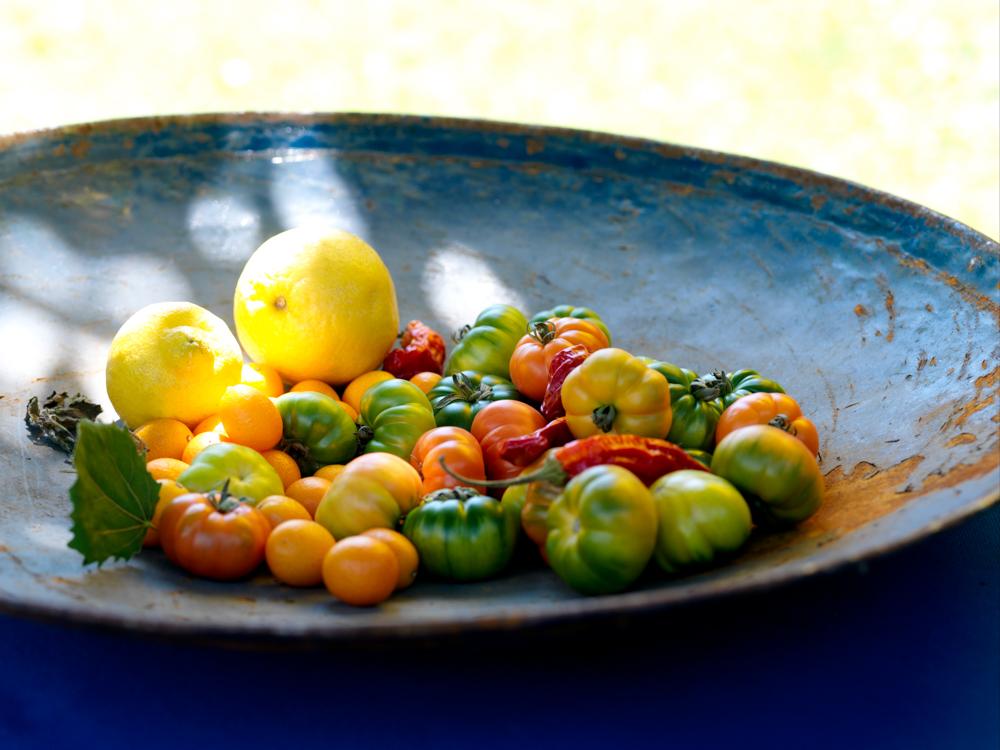 bildarchiv-gemuese-tomaten-02.jpg