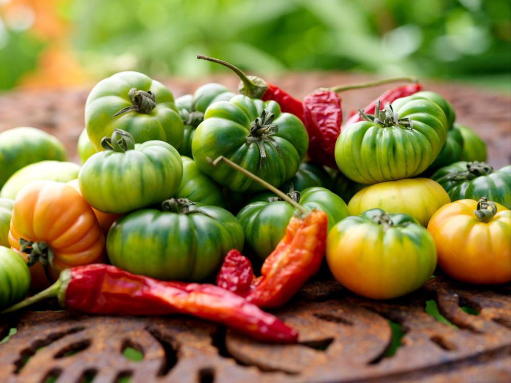 bildarchiv-gemuese-tomaten-01.jpg