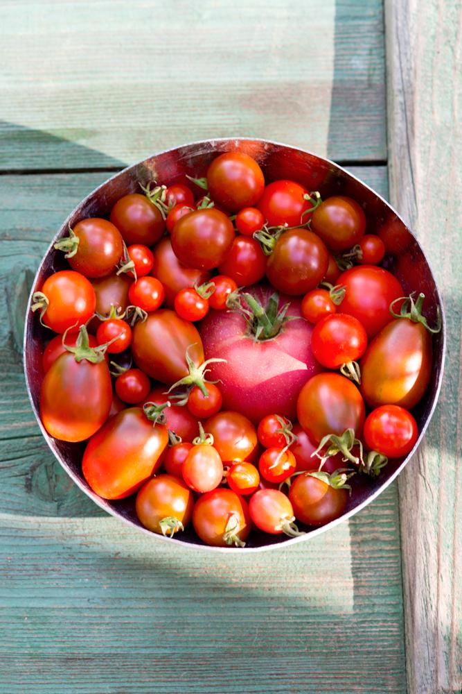 bildarchiv-gemuese-tomatensorten.jpg