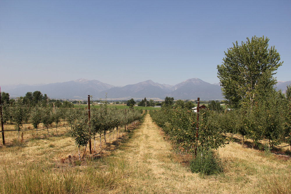 CraftCider_Apple_Hard-Cider_Montana_Missoula_Orchard.jpg