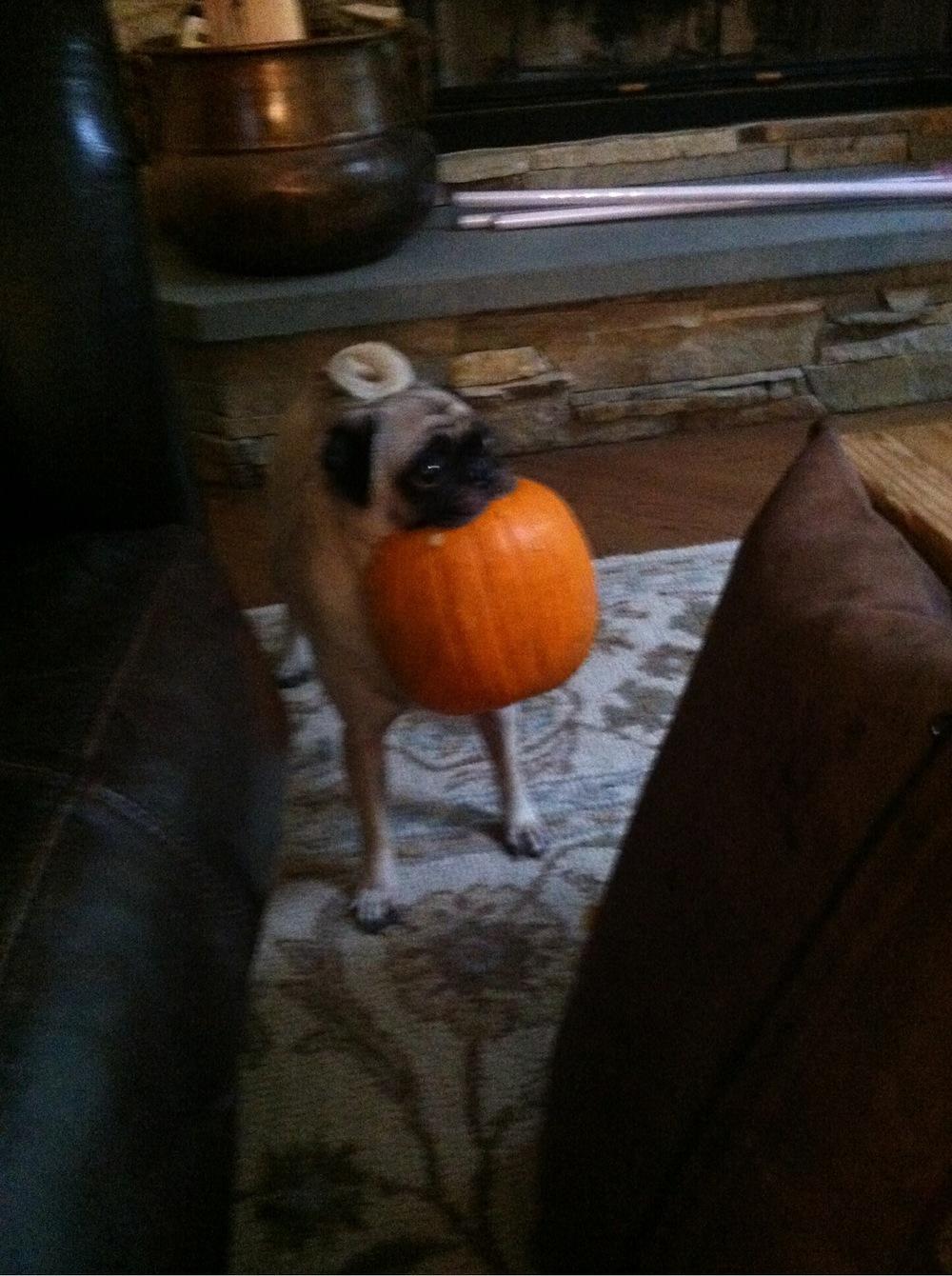cleo and pumpkin
