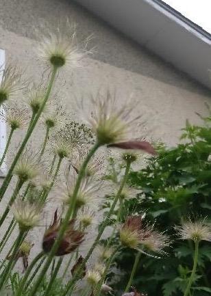 alley flowers.jpg