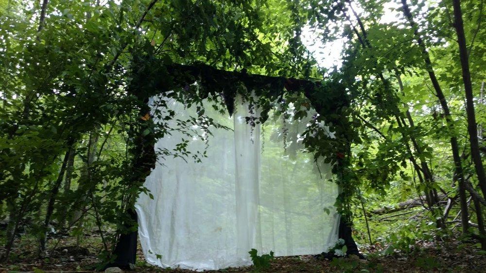 ForestPortal2.jpg