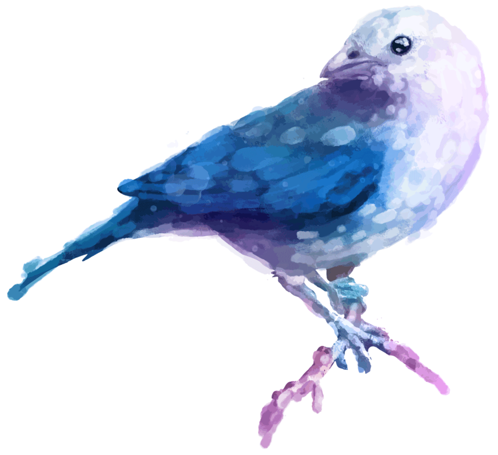 feather_5834028.png