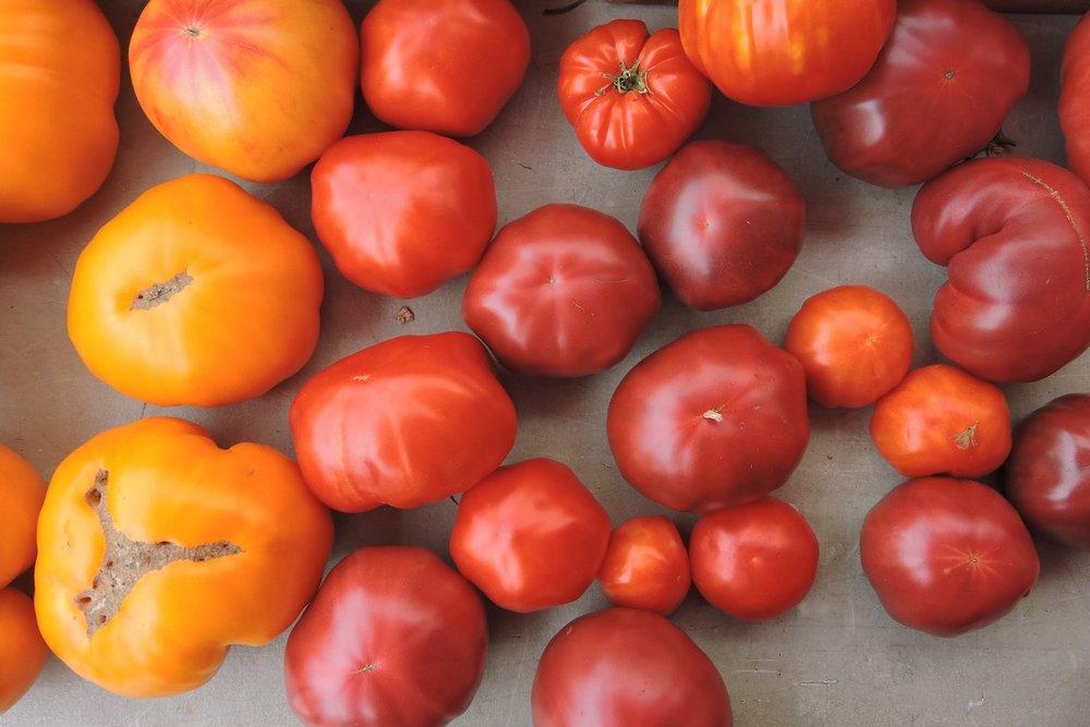 tomatoes_farmers_market.jpg