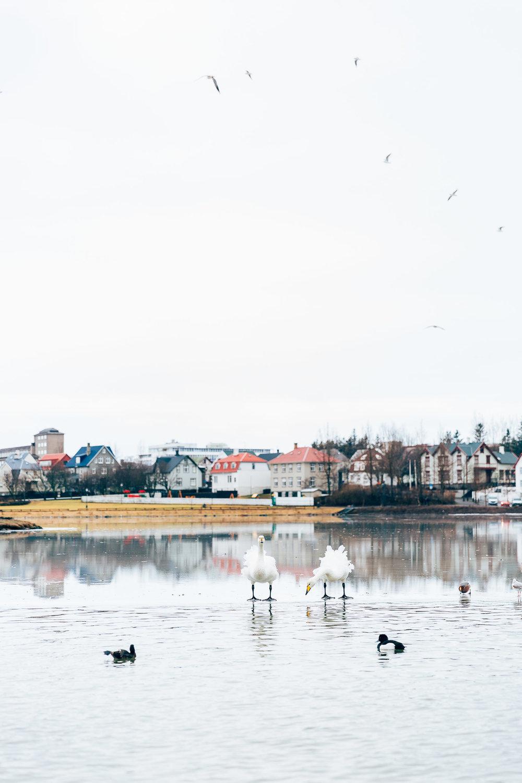 02_2019_Iceland-44.jpg