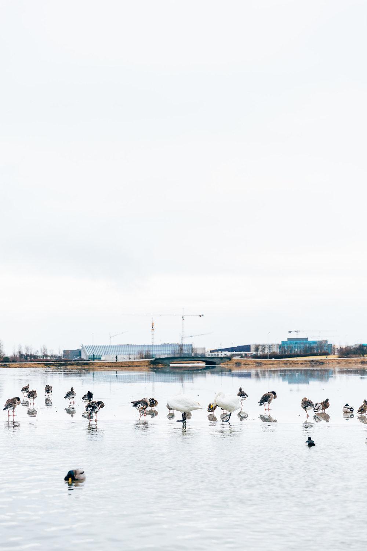 02_2019_Iceland-46.jpg