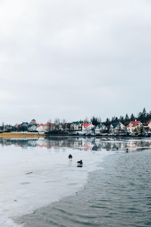 02_2019_Iceland-58.jpg