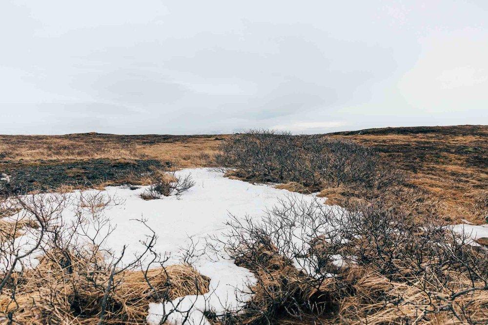02_2019_Iceland-324.jpg