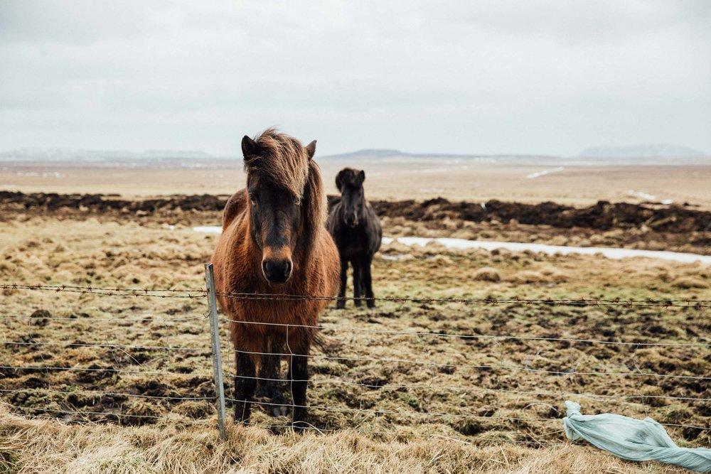 02_2019_Iceland-334.jpg