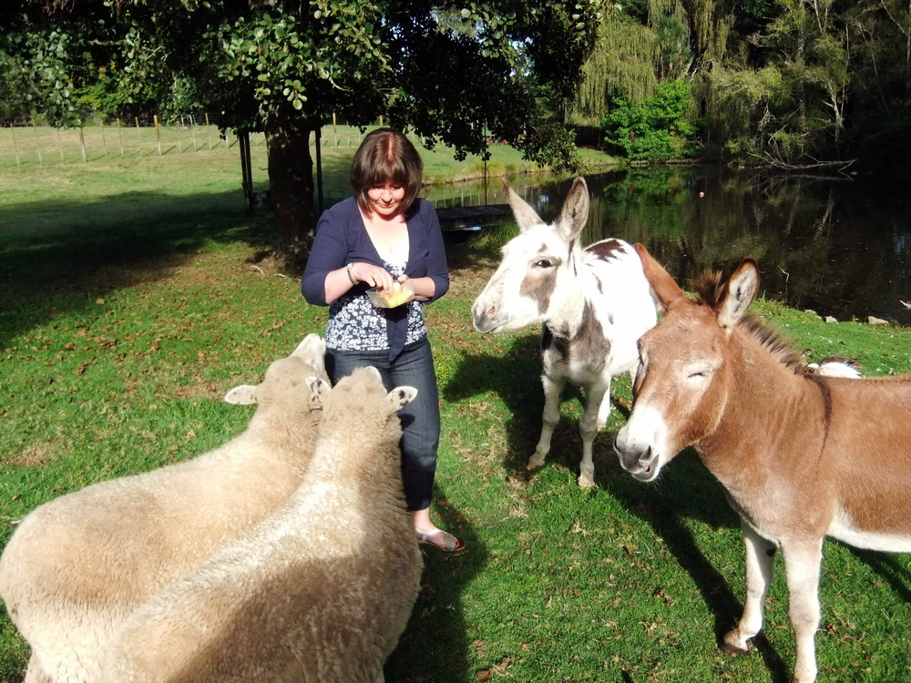 Feeding the animals at Mokoia Downs.JPG