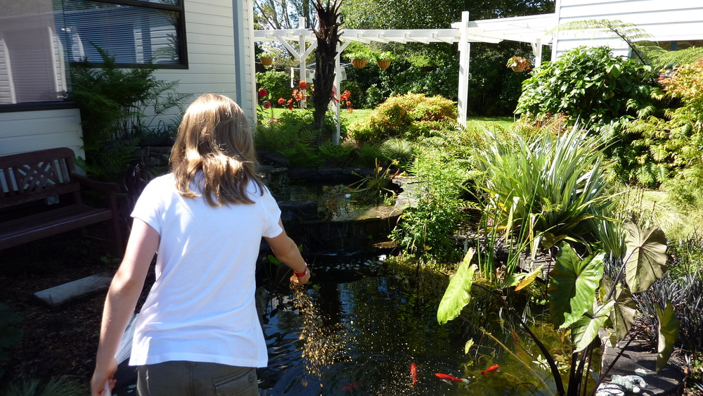 Feeding the goldfish at Mokoia Downs.JPG