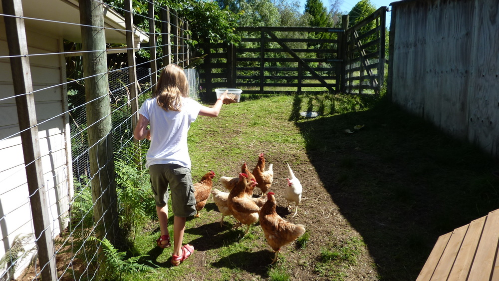 Feeding the hens at Mokoia Downs.JPG