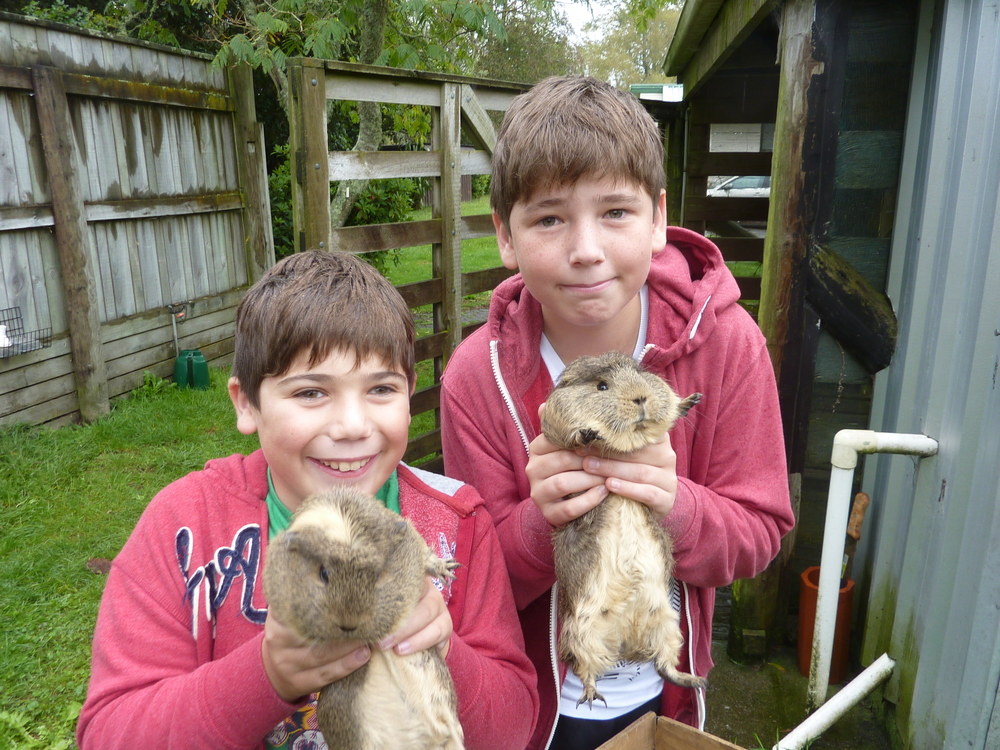Meeting the Guinea pigs at Mokoia Downs.JPG