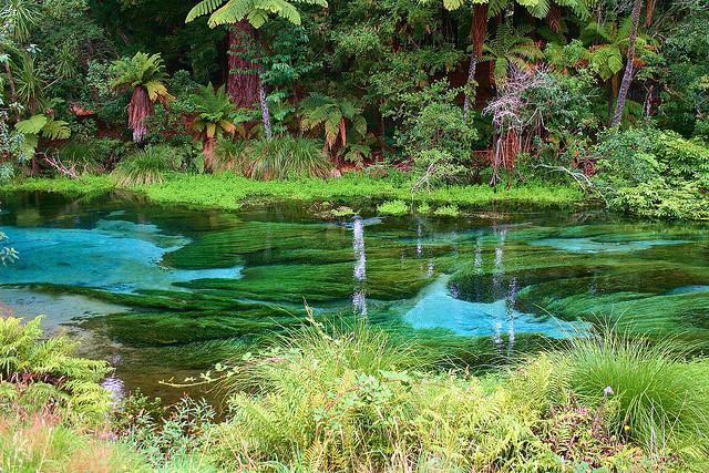 Hamurana Springs.jpg