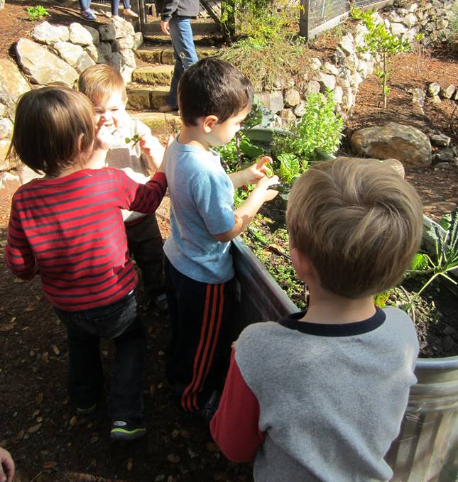 WE GROW OUR OWN GARDEN FULL OF FLOWERS, VEGETABLES AND HERBS.  THE CHILDREN HELP TO TAKE CARE OF IT AND LEARN FROM THEIR EXPERIENCE.