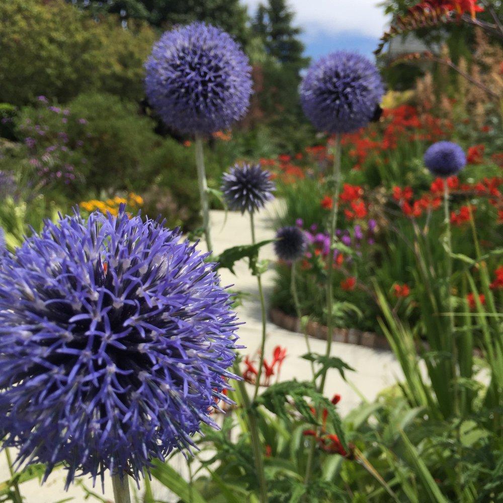 Flowers in Seattle