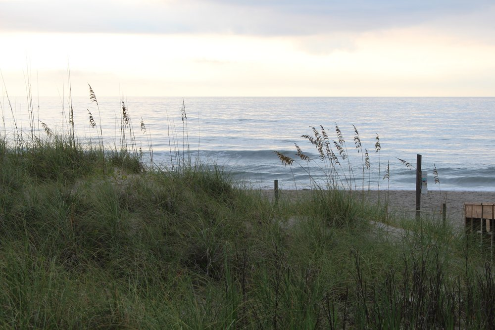 Beach Dunes and the Ocean at Carolina photo by Alisha