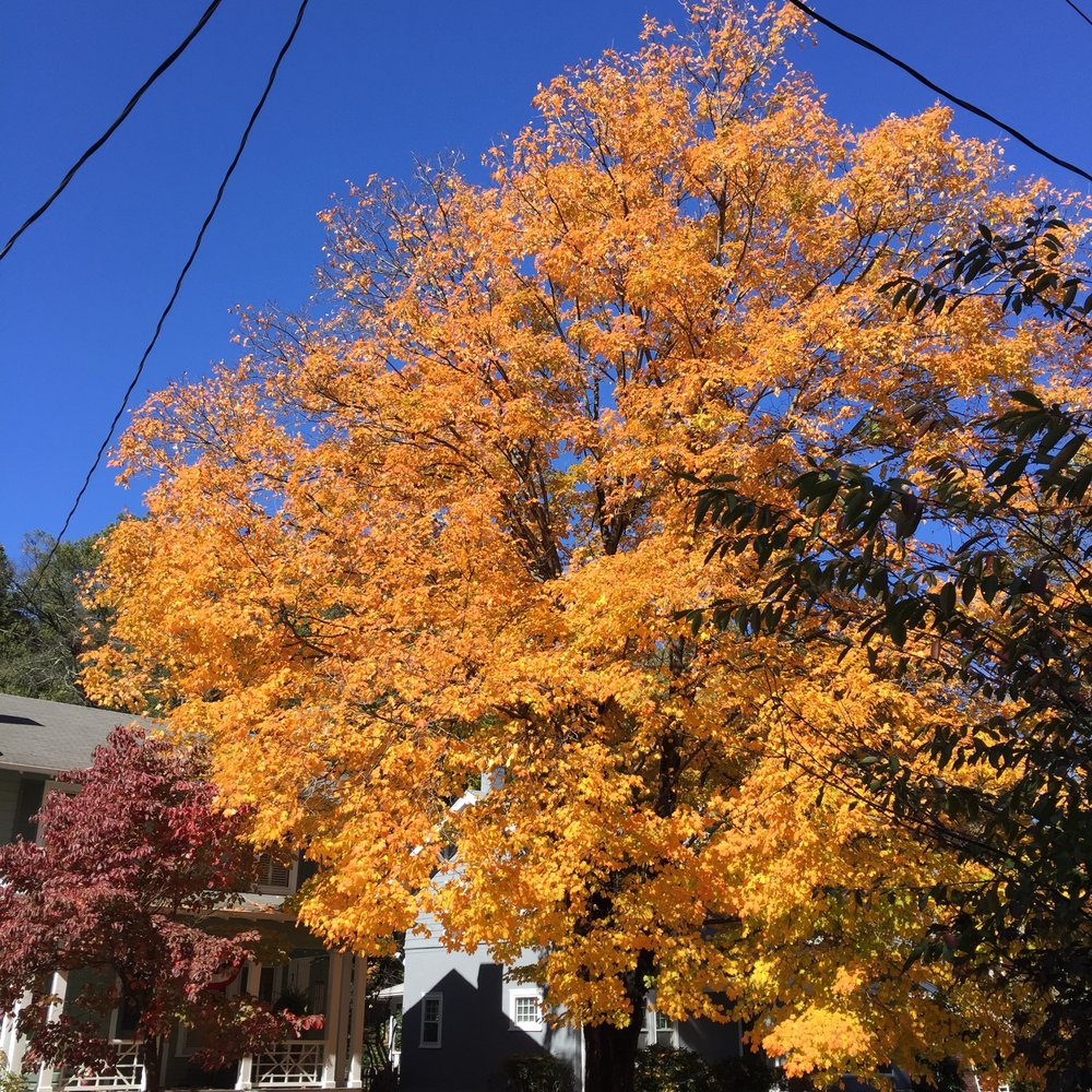 Fall on Mendenhall