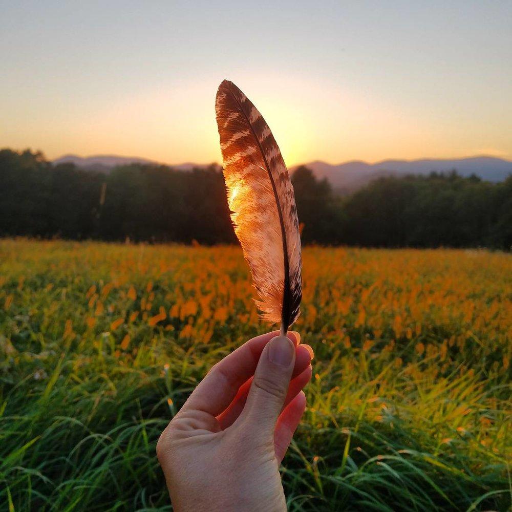 Leigh Ann Henion's Feather Image
