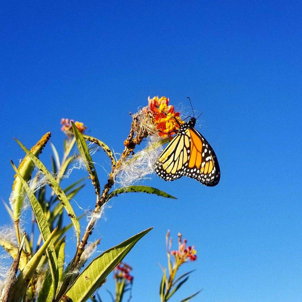 Leigh Ann Henion's Butterfly
