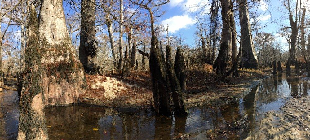 Three sisters swamp, NC