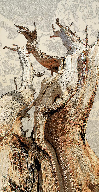 Bristlecone I (goddess)