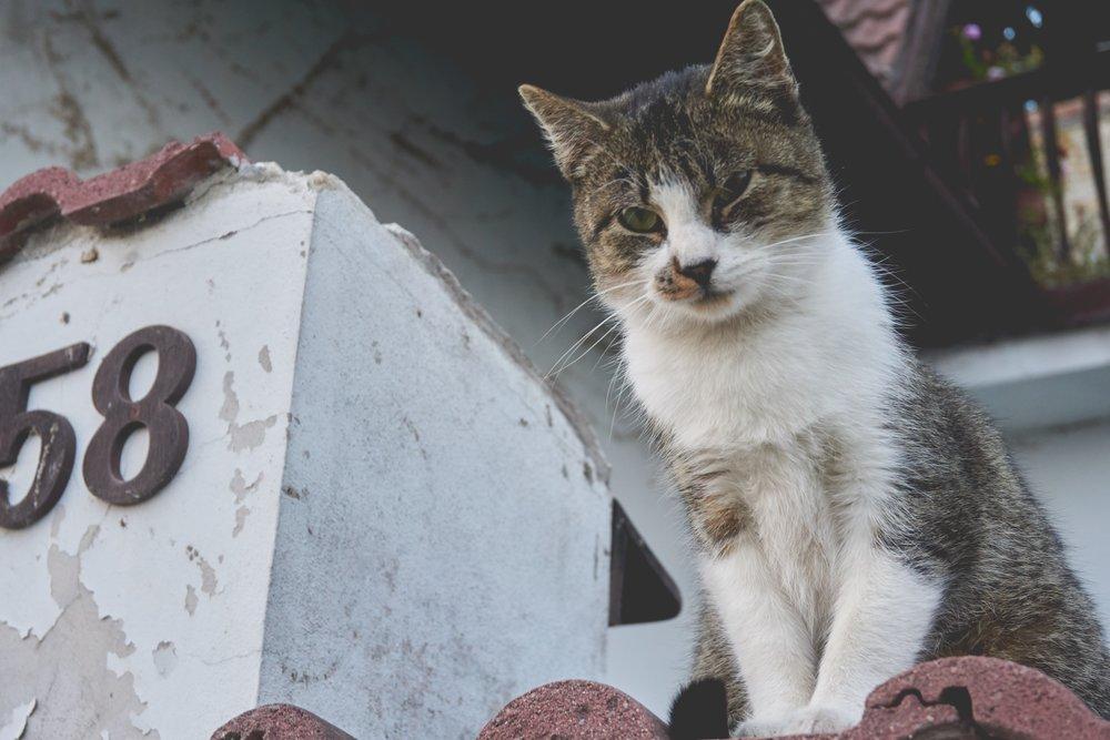 58-animal-cat-204106.jpg