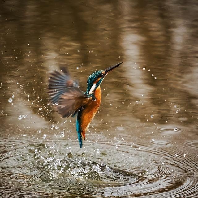 kingfisher-1068684_640.jpg