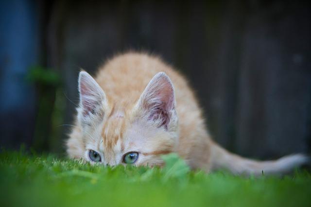 cat-71495_640.jpg