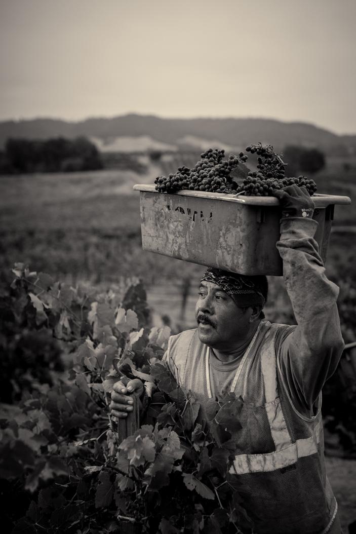 Harvest9.jpg