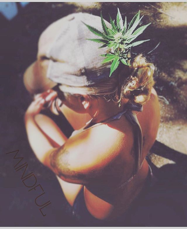 #TBT to many moons ago in the garden, Mindful just a twinkle in our eyes. For the love of the plant, for the love of the medicine 💚 #mindful  #mindfulpdx #craft #cannabis #organic #gardening #cannabiscommunity #cannabisculture #onthefarm #hightimes #420 #staymindful #female #plant #womenwhofarm