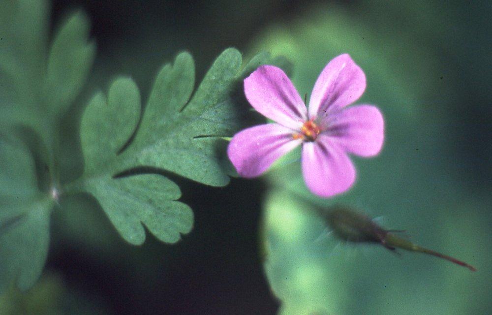 flowers041.jpg
