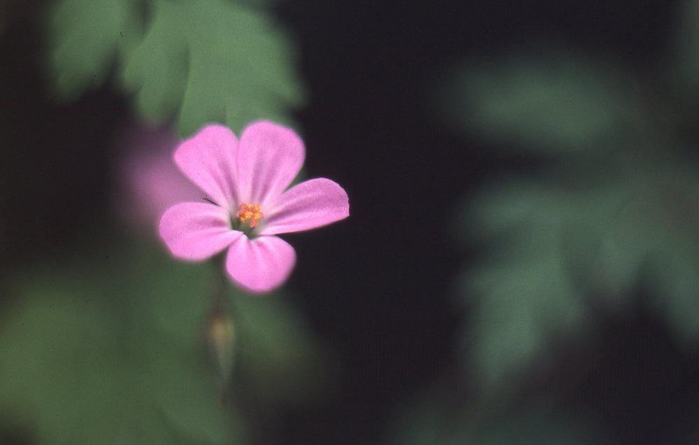 flowers045.jpg