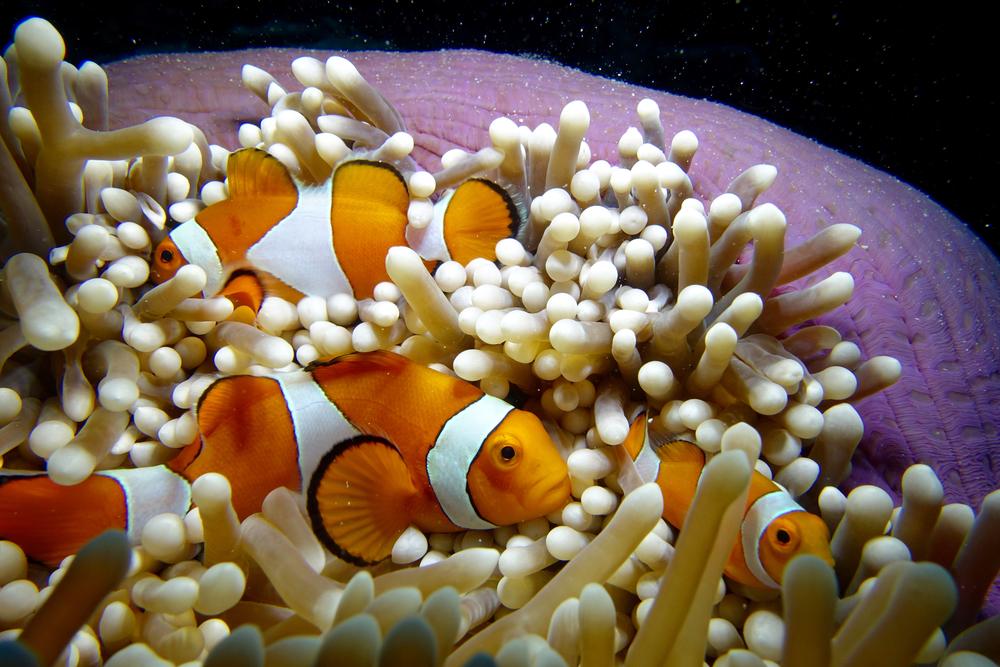 Reef Society-160504-Banda Sea-Komba-54.jpg