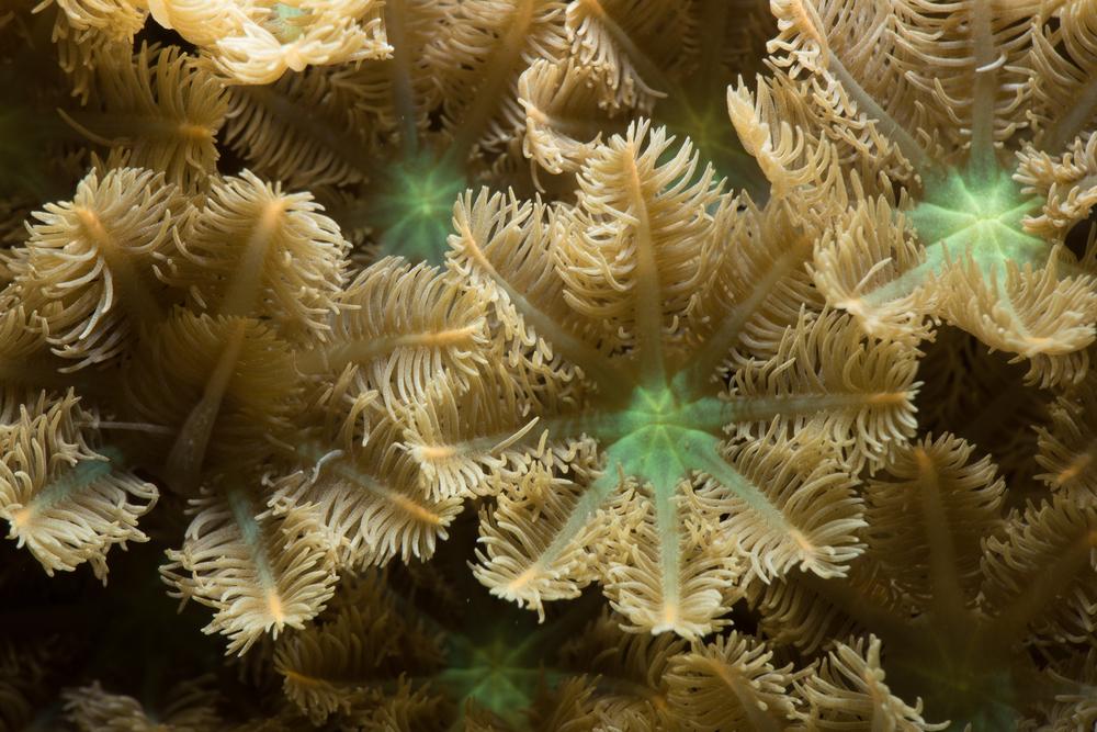 Reef Society-160504-Coral Reef- -10.jpg