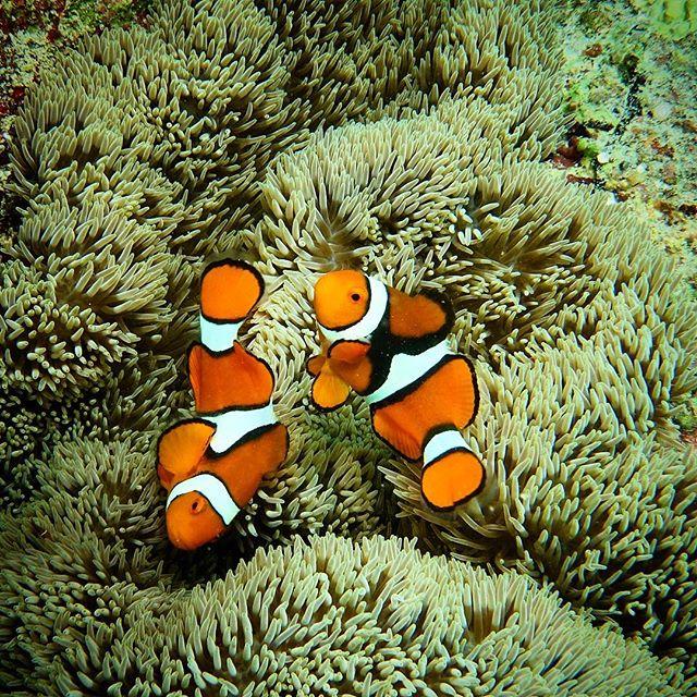 Yin and Yang - Christmas at Nemo's place. 🐠🐬🐟🎄