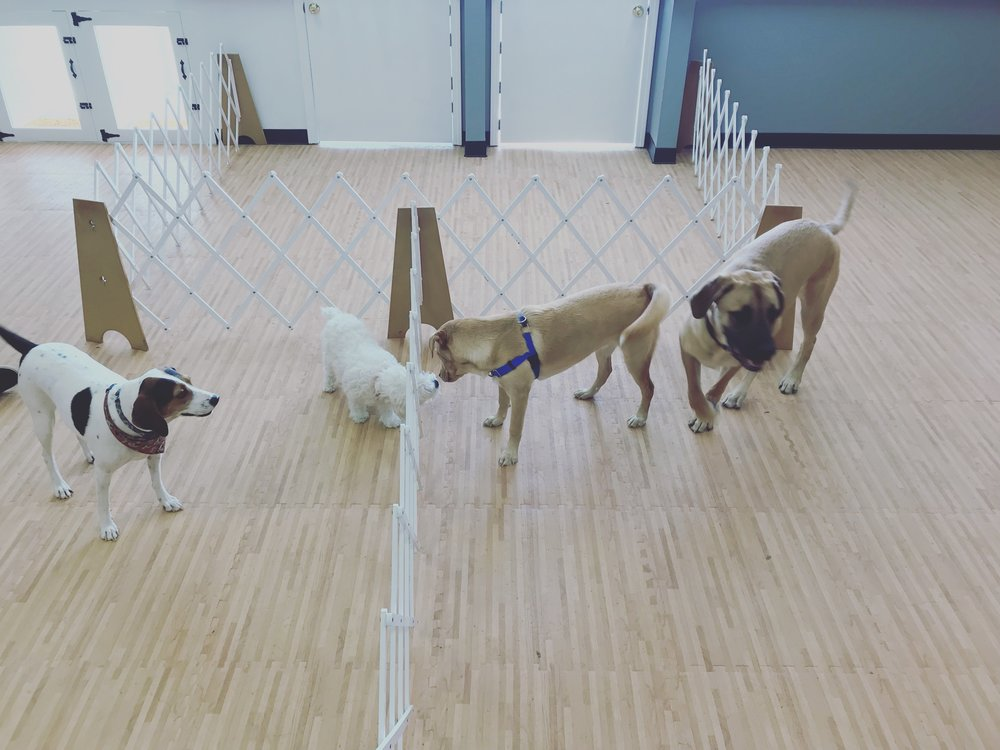 Group Dog Training Classes & Workships -