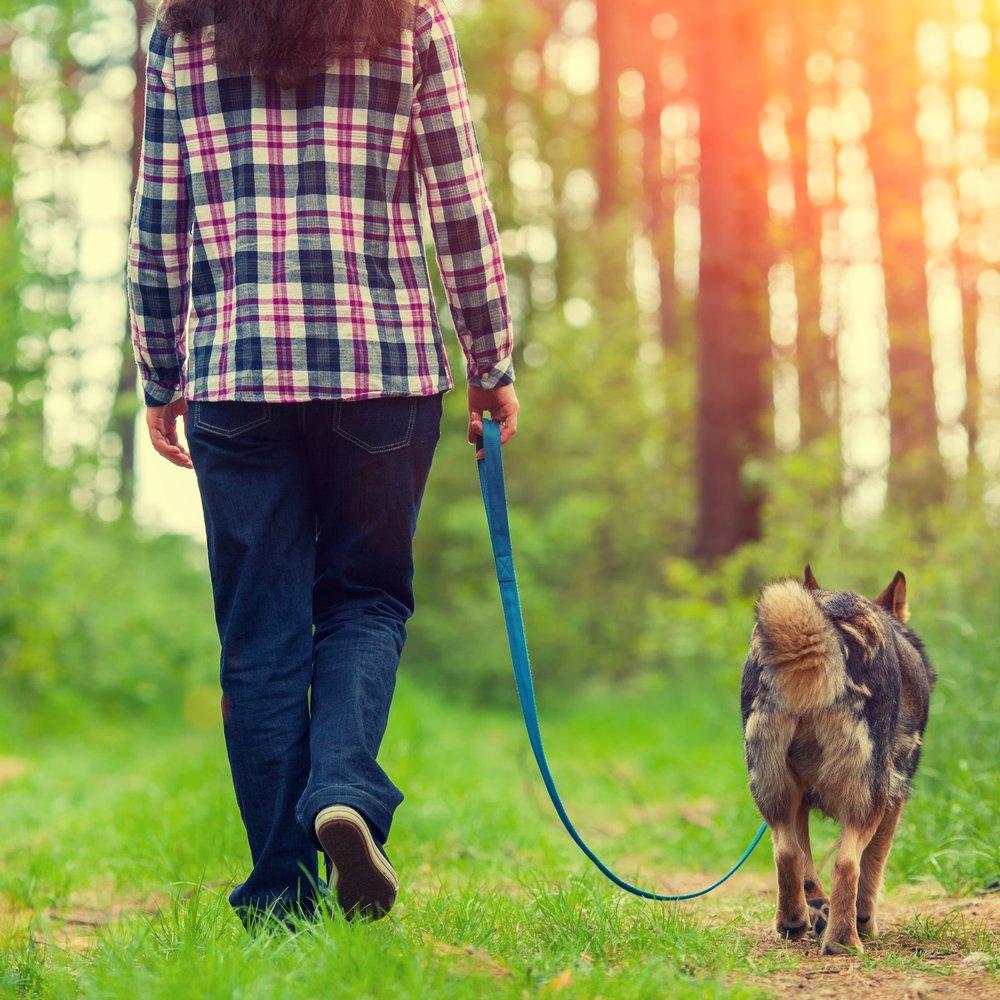 Loose Leash Walking Workshop -