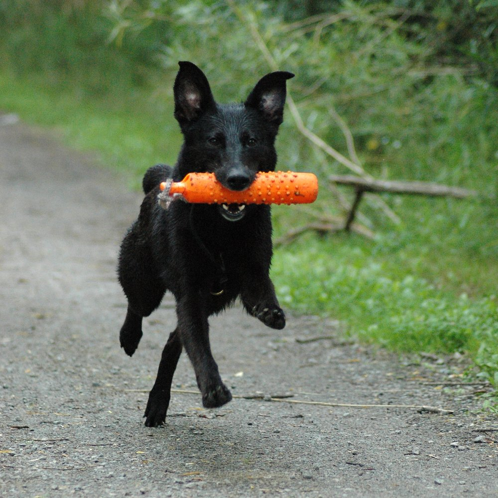 Basics of Retrieving Workshop   Interested in teaching your dog to retrieve? Whether for fun or for sport, this workshop is the place to begin. During this one-hour session we will shape the retrieve using successive approximation, the behavior will be broken down into components with an accompanying cue including: Pickup, Hold, Carry, and Drop. We will also discuss the process of increasing criteria over time while chaining components into a conditioned retrieve.