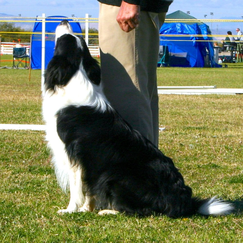 Try Rally Obedience! Workshop   This workshop is a great way to introduce yourself and your dog to the sport of Rally Obedience. This fun filled sport is a great excuse to practice obedience behaviors and cultivate a well-mannered dog at home, while earning recognition for it!