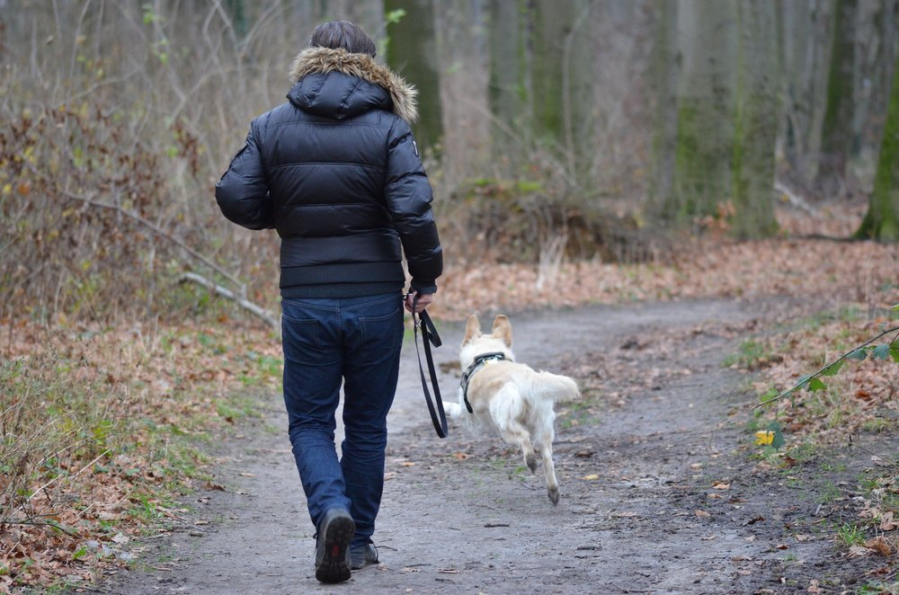 Fitness Sessions - Intensive walks, by the mile for a flexible approach to your pet's exercise routine.