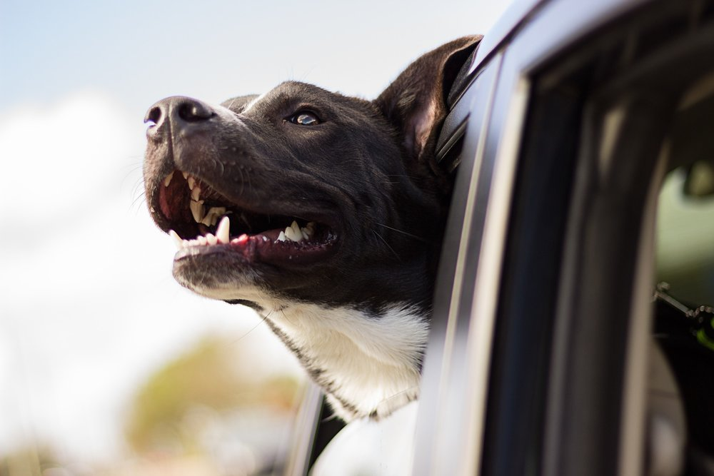 Pet Taxi - Breathe easy knowing your pet can get to their appointments, and you can get to yours! Request pick-up and drop off with our Pet Care Specialist using the contact form at the bottom of the linked page:*Rates vary based on distance
